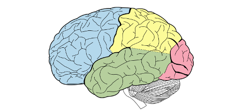 Epilepsy - Focal Seizures